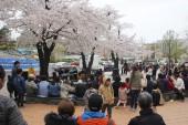 경기도, 올해도 '경기도청 봄꽃축제' 취소…벚꽃 개화기 청사 등 통제